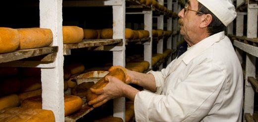 Procés d'elaboració del formatge artesanal DOP formatge de Maó (Menorca - 22/gener/09)